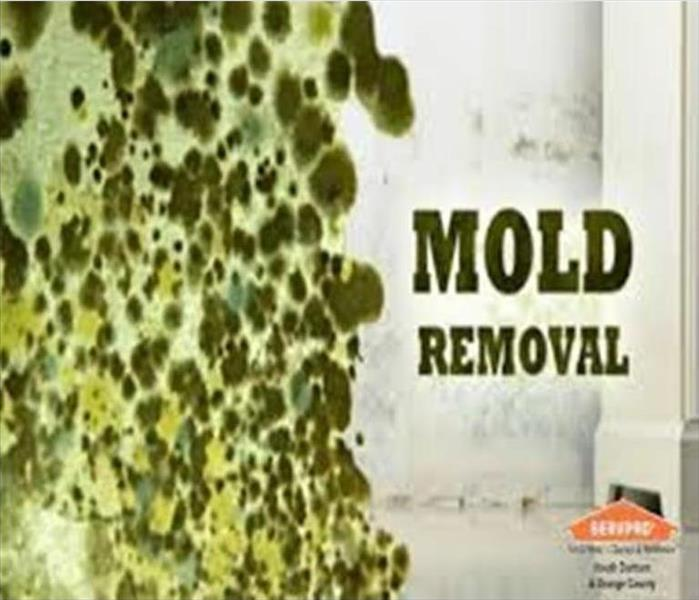 Mold Remediation Health Risks of Mold