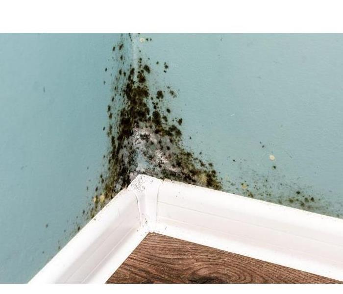 Mold Remediation How to Control Mold Growth
